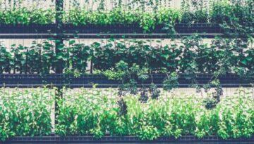 Regale mit Pflanzen